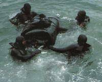 Les commandos marine Français (en construction) CHtarpon